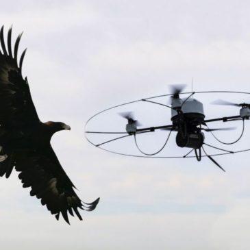 Поліція Нідерландів ловить дрони за допомогою орлів